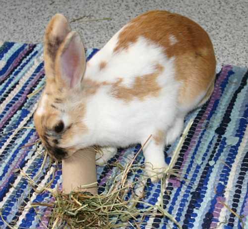 Kaninchen info beschäftigung