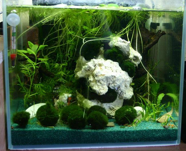wasserschnecken aquarien. Black Bedroom Furniture Sets. Home Design Ideas