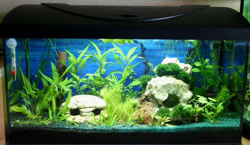 aquarium bodengrund aufbau zuhause image idee. Black Bedroom Furniture Sets. Home Design Ideas