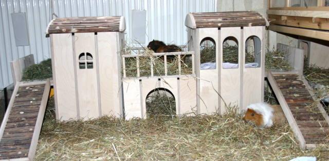 meerschweinchen info gro e abenteuerburg zwergi f r zwergkaninchen. Black Bedroom Furniture Sets. Home Design Ideas
