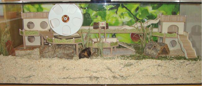 goldhamster das erste mal k fig einrichtung usw hamster n tige. Black Bedroom Furniture Sets. Home Design Ideas