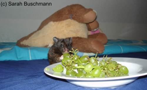 wieviel gurke darf man am tag essen