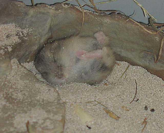 großer hamsterkäfig kaufen
