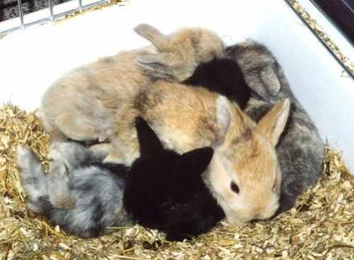 Kaninchen Info - Nachwuchs