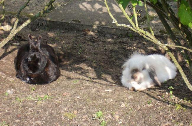 mittel gegen kaninchen so werden sie wildkaninchen los. Black Bedroom Furniture Sets. Home Design Ideas