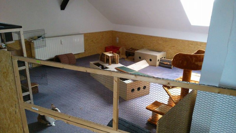 kaninchen zwergkaninchen ein zimmer f r bunny und moppel. Black Bedroom Furniture Sets. Home Design Ideas
