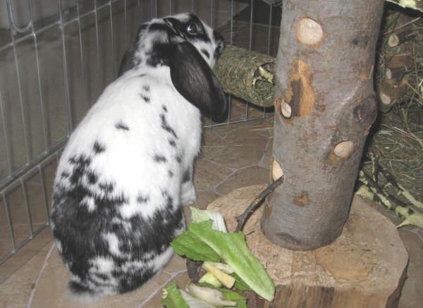 kaninchenfutter selbst machen
