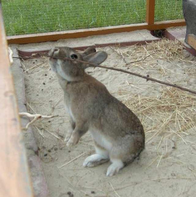 Was kann man mit kaninchen spielen