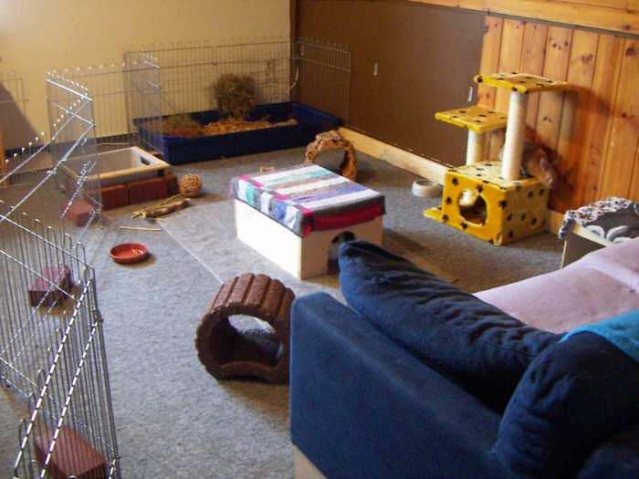 kaninchen info wohnungsgehege mit gitterelementen tiergerecht gestalten. Black Bedroom Furniture Sets. Home Design Ideas
