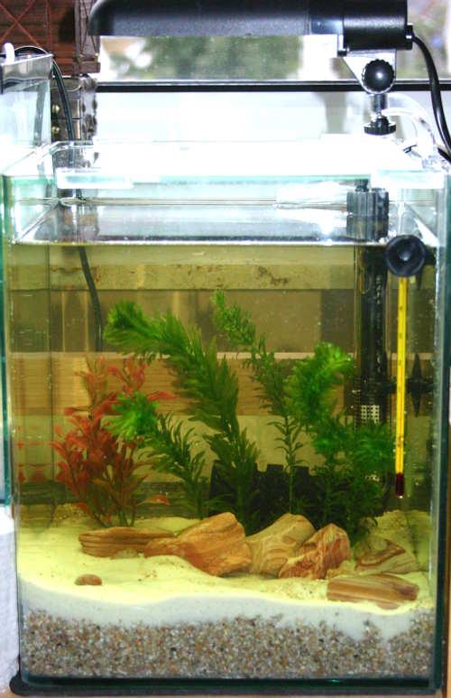 daphnien wasserfl he das miniaquarium mit teichwasser. Black Bedroom Furniture Sets. Home Design Ideas