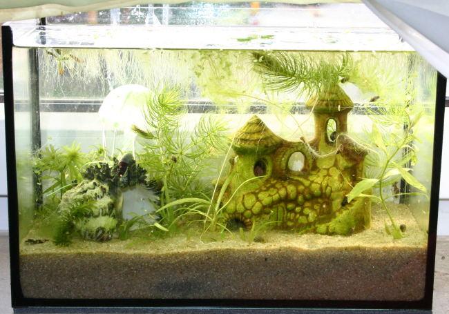Daphnien wasserfl he das miniaquarium mit teichwasser for Teichwasser