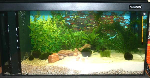 pin aquarium richtig einrichten neben zubeh r muss auch. Black Bedroom Furniture Sets. Home Design Ideas