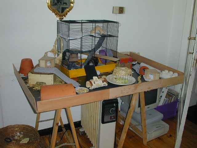mausebande forum ich glaub mich hat es nun doch erwischt. Black Bedroom Furniture Sets. Home Design Ideas
