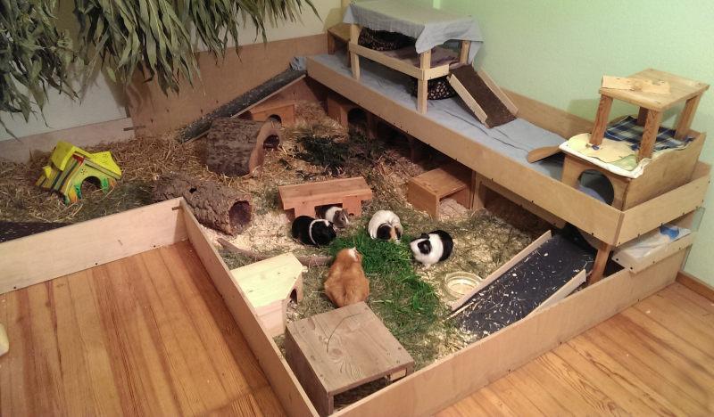 Из чего можно сделать домик для морской свинки своими руками 82
