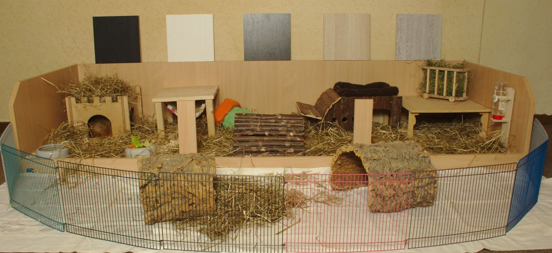 k figgr f r 2 meerschweinchen k fig. Black Bedroom Furniture Sets. Home Design Ideas