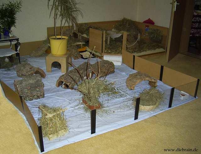 k fig vom hersteller meerschweinchen. Black Bedroom Furniture Sets. Home Design Ideas