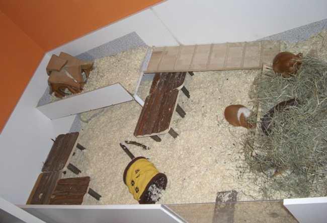 wie viel platz f r meerschweinchen. Black Bedroom Furniture Sets. Home Design Ideas