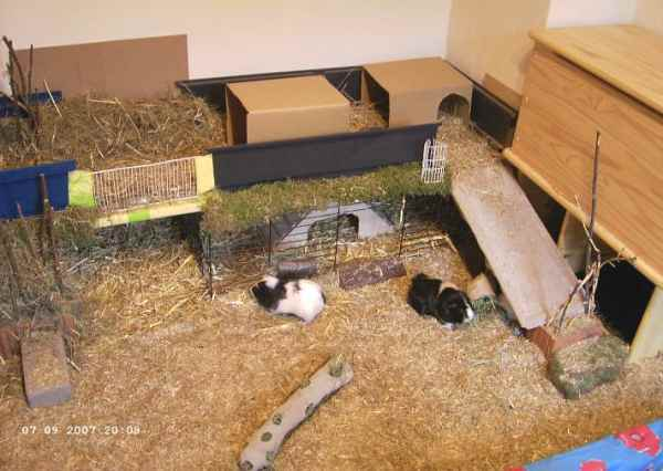 meerschweinchen info gehege eigenbau. Black Bedroom Furniture Sets. Home Design Ideas