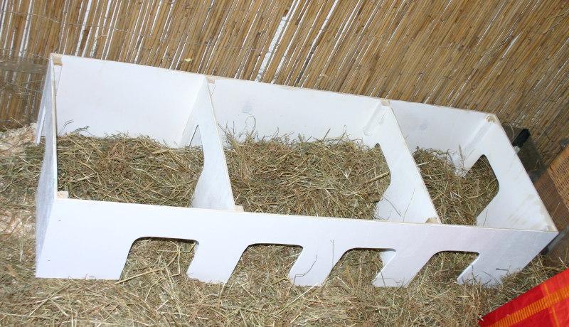 meerschweinchen info h user im meerschweinchengehege. Black Bedroom Furniture Sets. Home Design Ideas