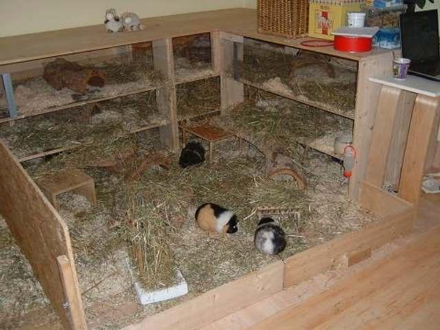 meerschweinchen gehege selber bauen