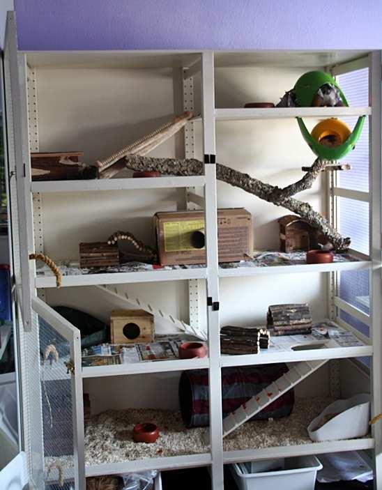 ratten info rudelgehege. Black Bedroom Furniture Sets. Home Design Ideas