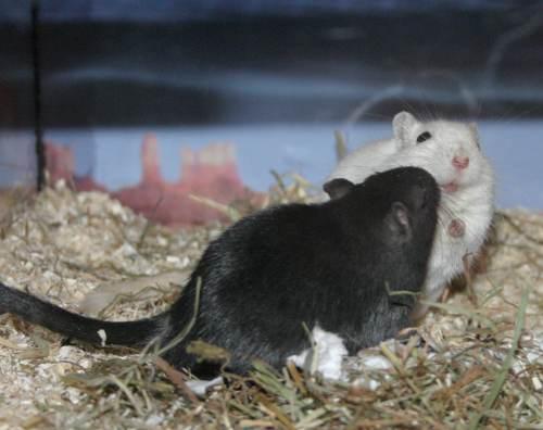mäuse geruch wegbekommen