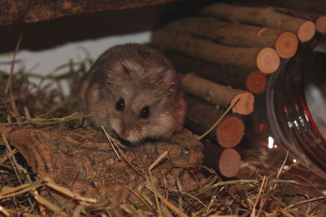 verstecke für hamster